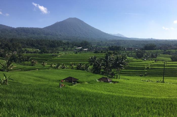 Coworking auf Bali